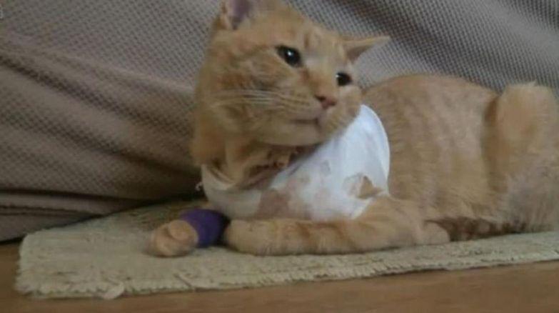 Кот спас жизнь юного хозяина, прикрывая его от пули.