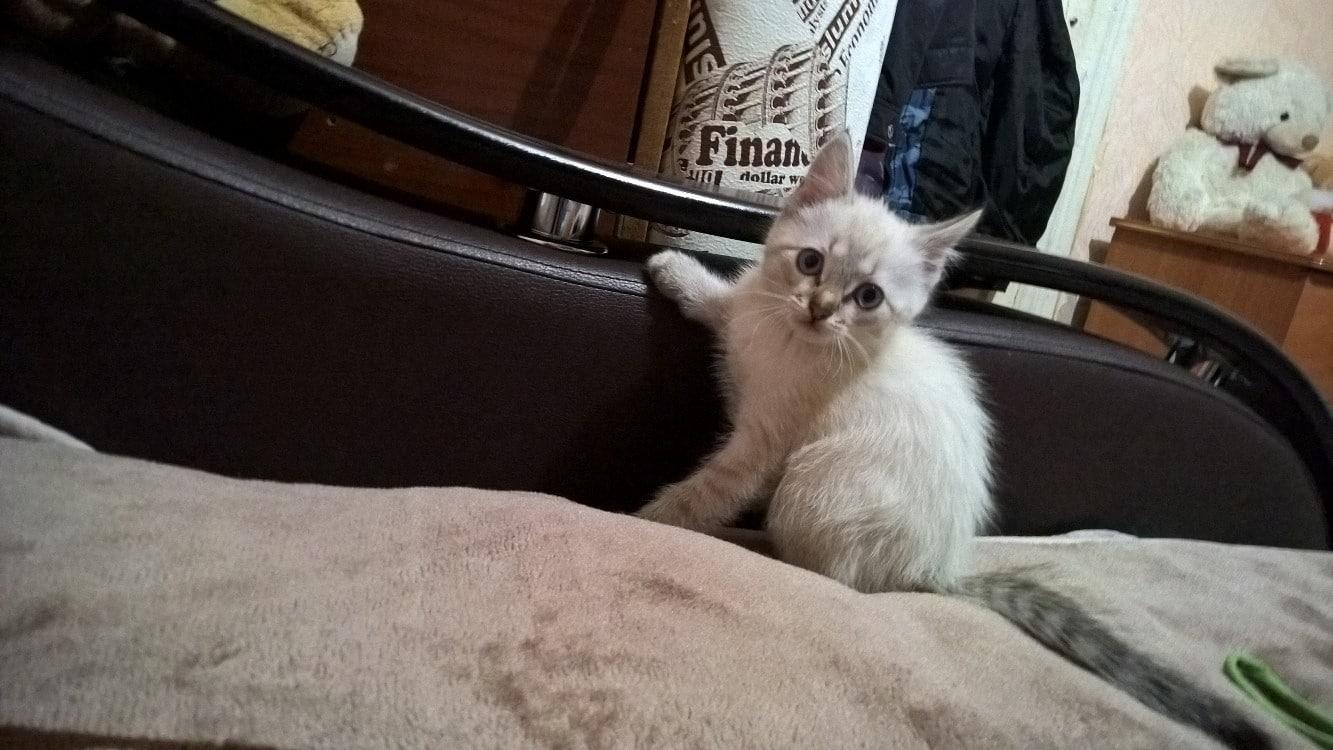 котенок на кровати