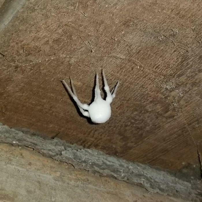 Обнаружил эту белую непонятную штуку в моем подвале. Мама в ужасе. Что это такое? видео, загадка, интересно, интернет, люди, объяснение, помощь, фото