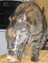 О шунгитовой воде и о животных