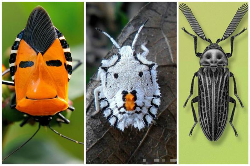 У насекомых все как у людей - они тоже делятся на букашек и жуков