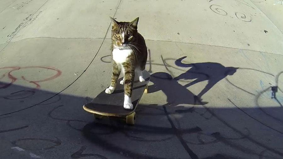 Кошачье трюкачество