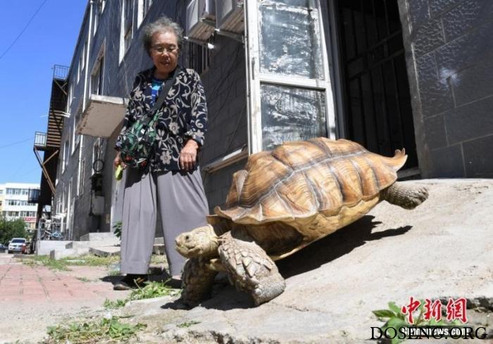Китайская бабушка выгуливает…