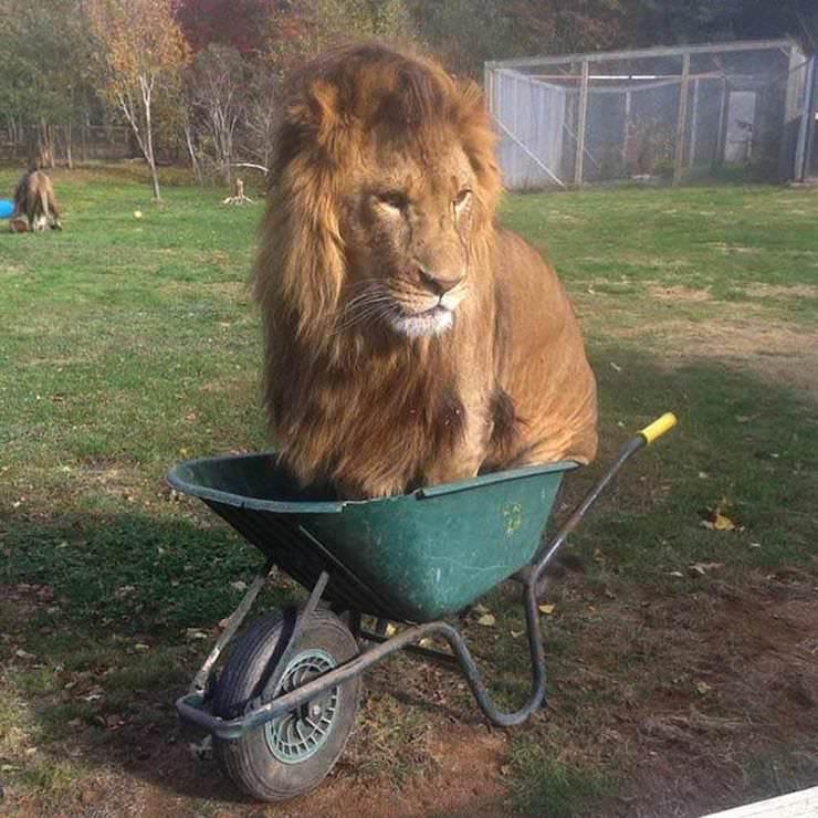 Почему коты так любят сидеть / ложиться в небольшие пространства  домашние животные,интересное,наши питомцы