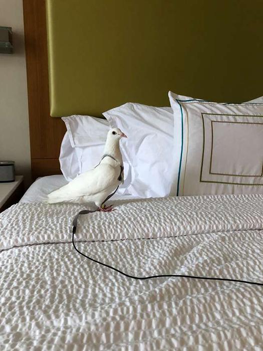 Люки-Лью. Далеко не всем голубям везет найти себе дом.