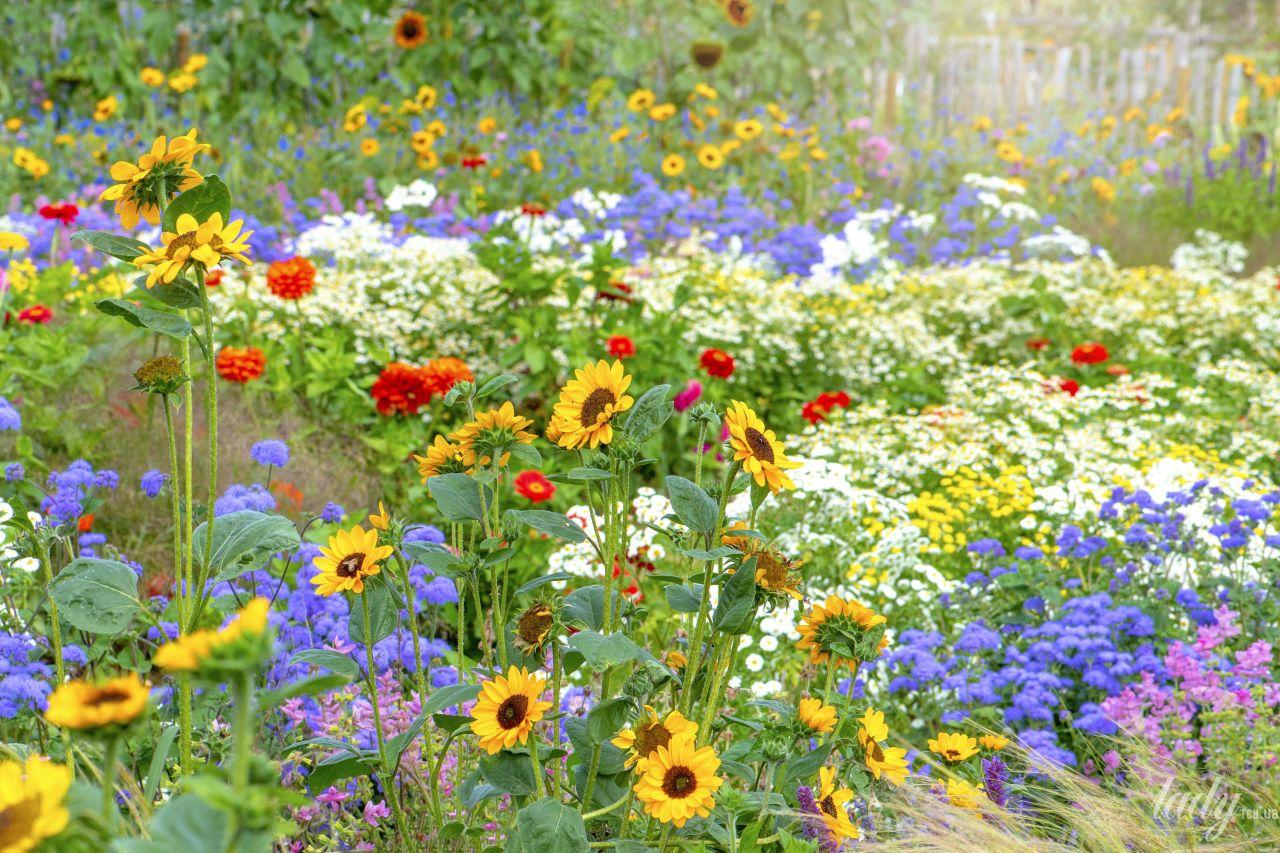 Как создать клумбу непрерывного цветения дача,сад и огород,цветоводство