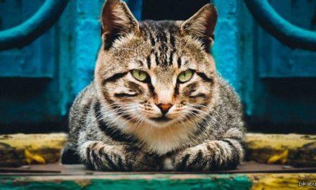 Первые десять лет жизни он был просто Кот...