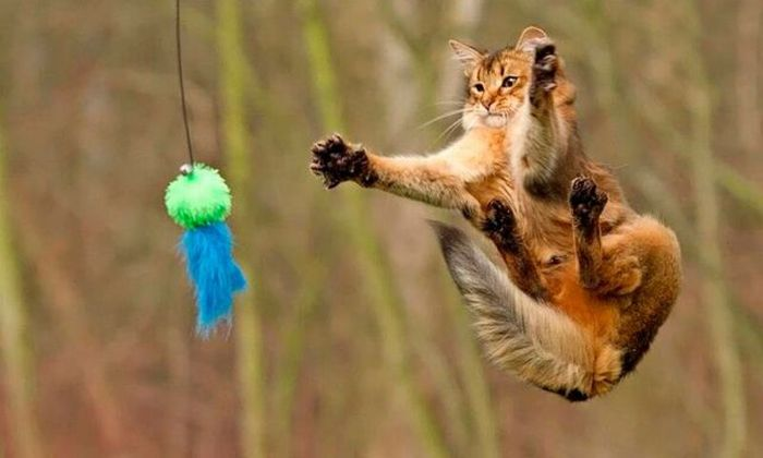 Котики, которые учатся прыгать и летать. Невозможно не улыбнуться!