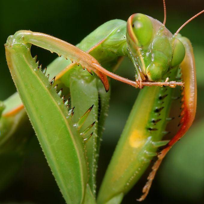 Фотографии насекомых в макросъемке