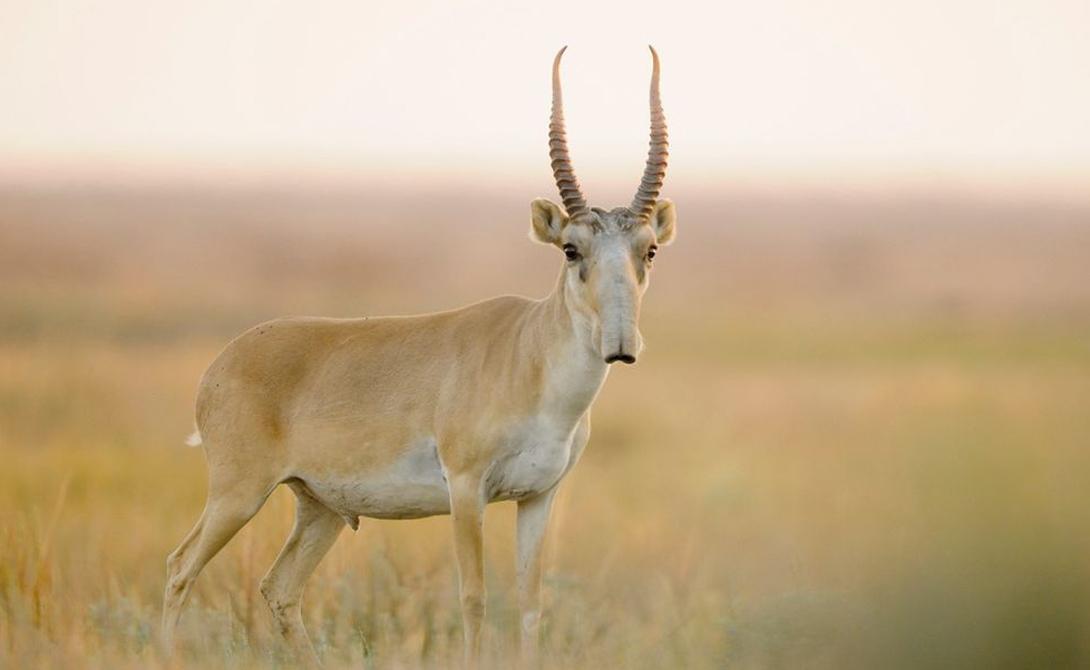 9 мифических животных, которые существуют на самом деле животные