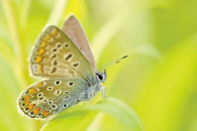 В Великобритании коллекционера осудили за убийство 30 бабочек