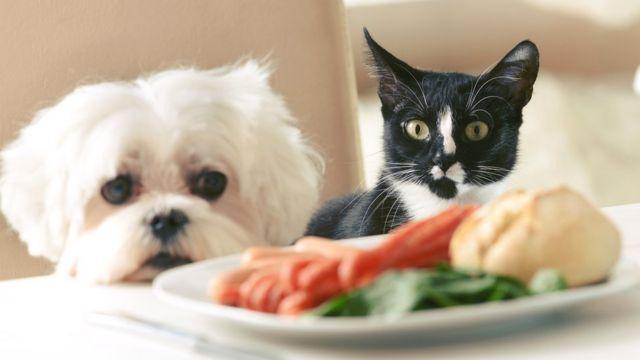 Почему промышленные корма вызывают у домашних животных чуть ли не наркотическую привязанность домашние животные,корма для животных,питание