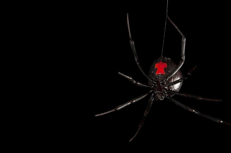 представленной картинки зловещие пауки нужно найти