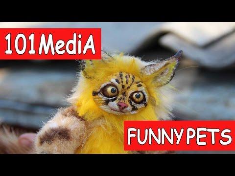 Постарайся не рассмеяться - Самые Смешные ЖИВОТНЫЕ 2017 |Смешные Коты Собаки|Новые приколы про котов