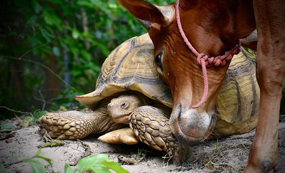 Необычная дружба между гиган…