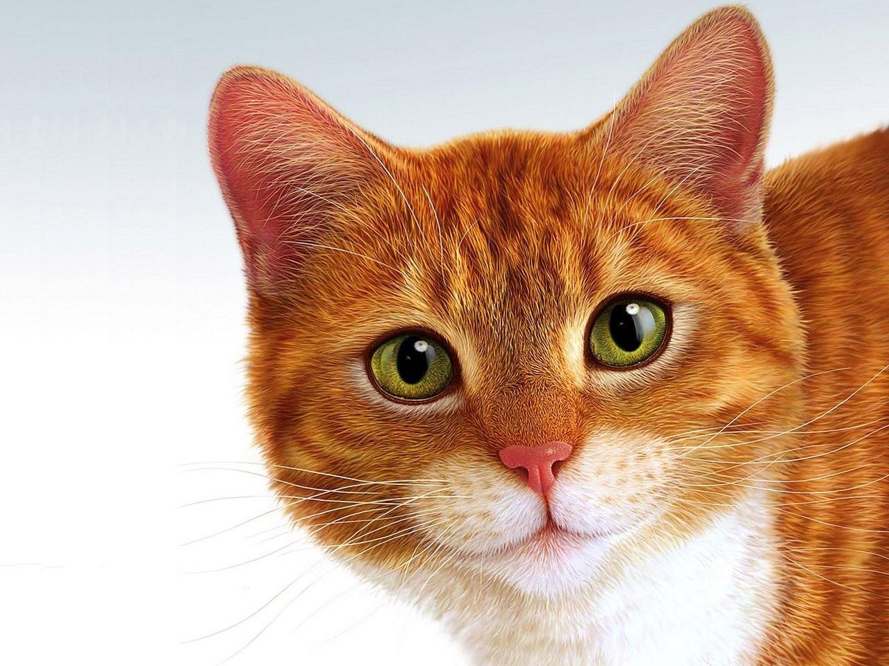 Без кота жизнь не та :)