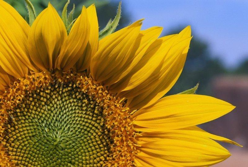 Почему цветы растут по всей планете загадка, парадокс, природа