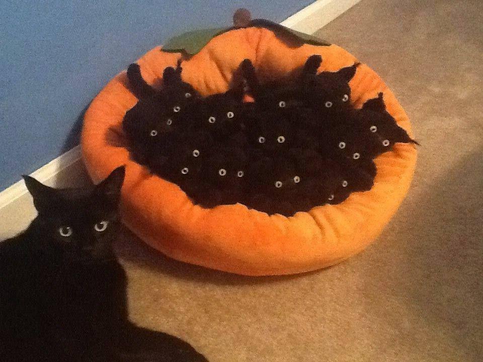 Фото котов, логику которых не понять