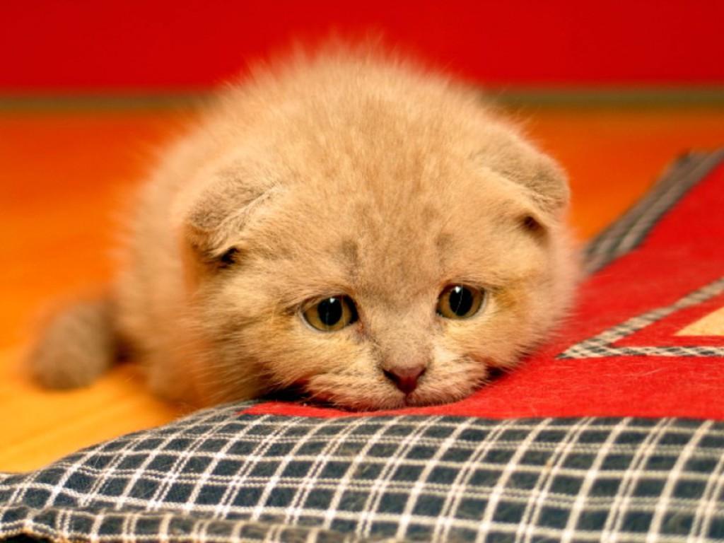 Картинки грустный котик