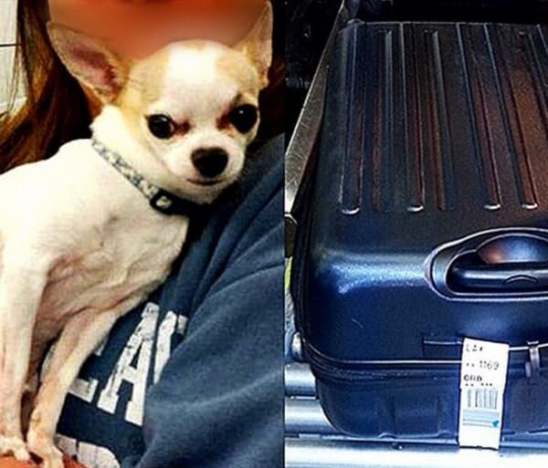 Чихуахуа аэропорт, багаж, контрабанда, служба безопасности, странные находки