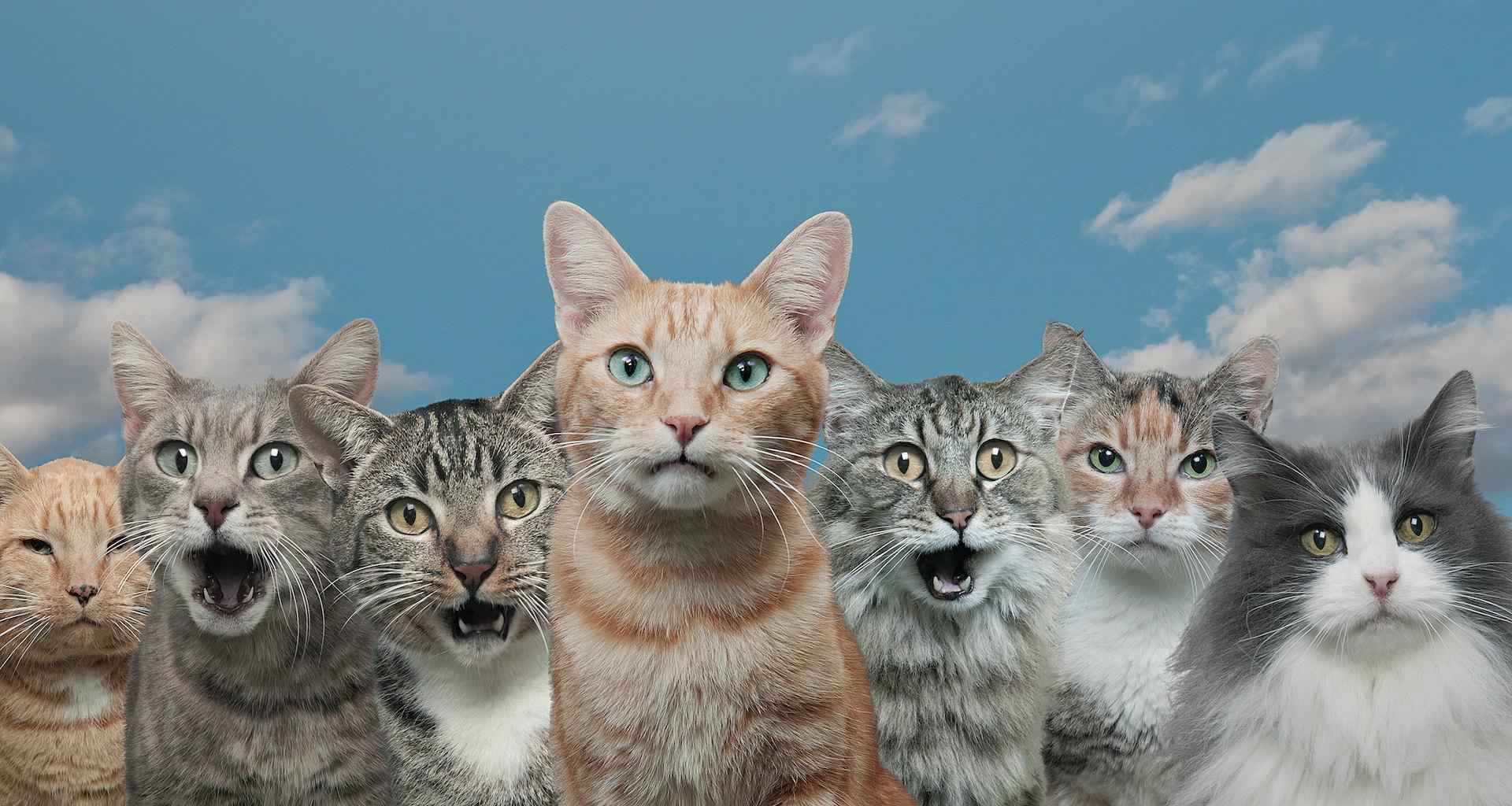 Мяу по‑русски: о чем говорят кошки