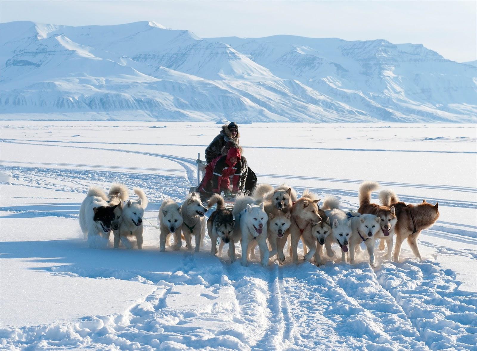Арктика и человек в картинках