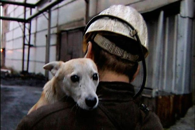 Памятник собаке-шахтеру
