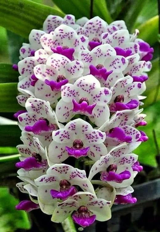 Грунт для орхидеи своими руками