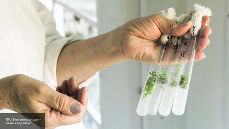 Ученые создали комнатное растение с геном кролика