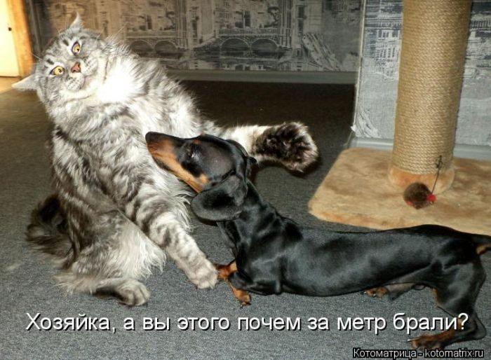 Большая подборка котоматриц на любой вкус)