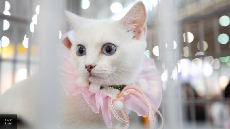 Врач Ярыгина рассказала, как уберечь кошек от зараженных инфекцией хозяев
