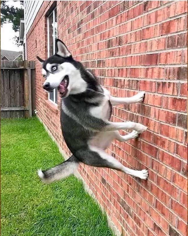 17. Пес-Паук домашние животные, домашние животные.собака, забавные собаки, пес, смешные фото, собаки, фото собак, юмор