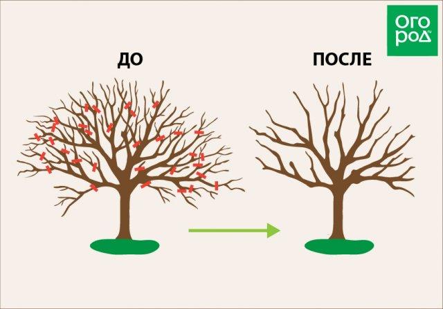 Как омолодить старую яблоню – полезные советы для начинающих садоводство,яблони