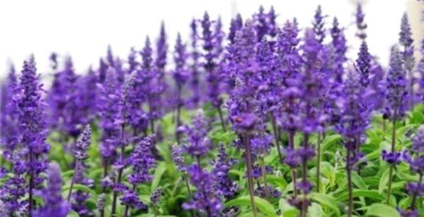Травяные сборы в борьбе с симптомами климакса