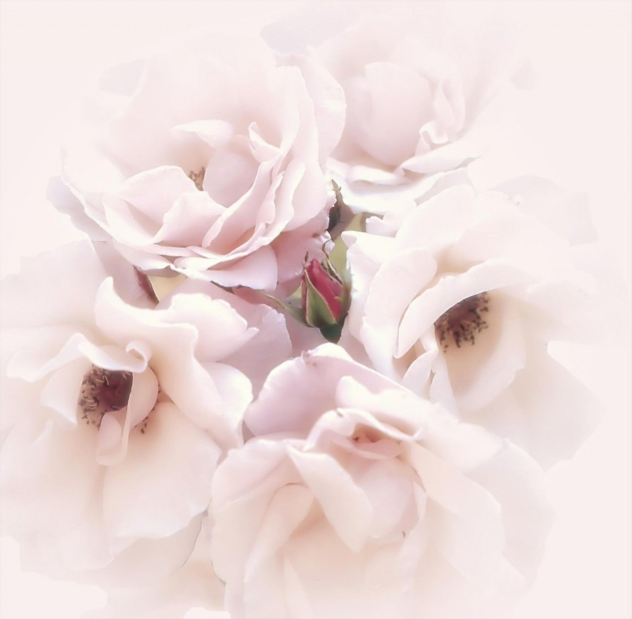 Цветок лилии белой фото