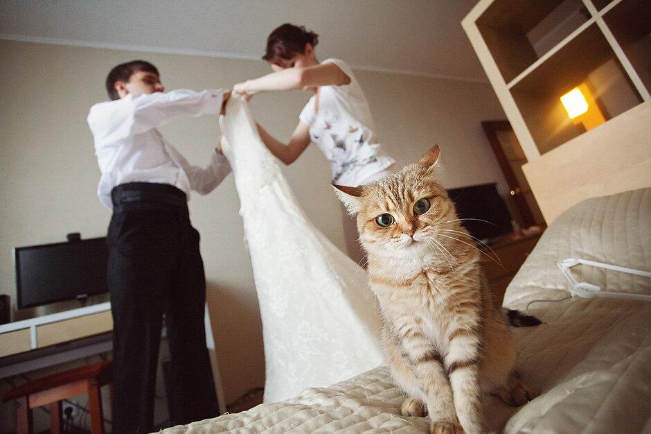 картинка с кошкой все замуж выходят будет интересна