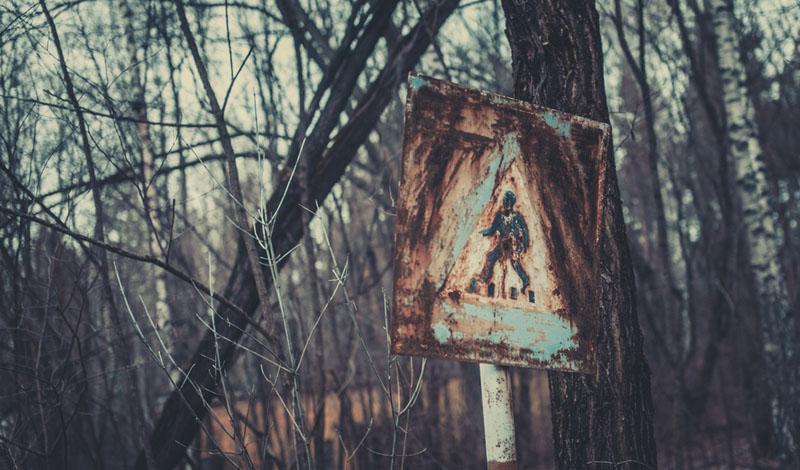 Ядерная корзина: что растет в Чернобыле авария