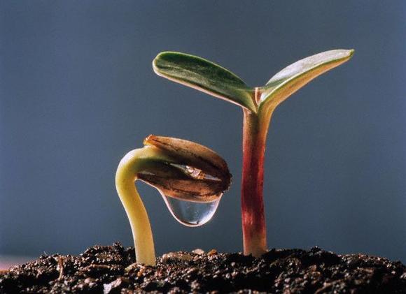 Интересный способ проращивания семян