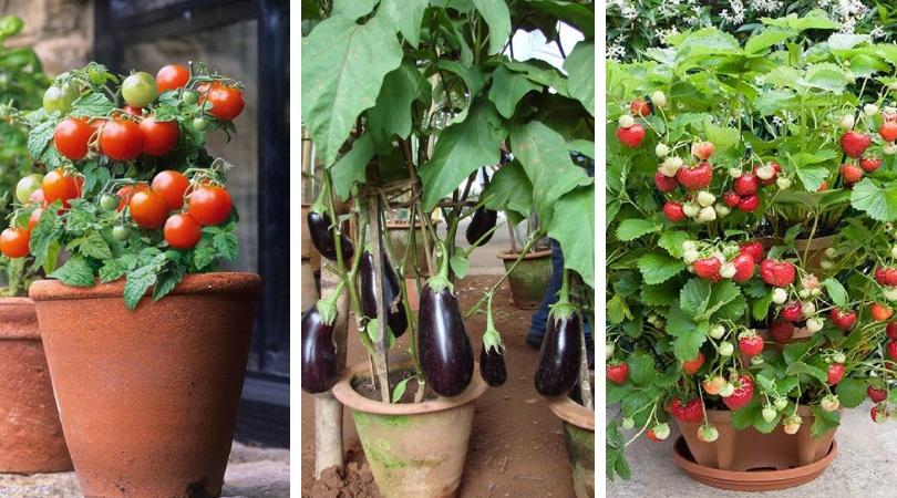 Как выращивать ягоды и овощи в контейнерах: 57 вкусных идей для дачи и города