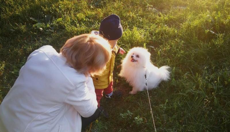 Собака как профилактика шизофрении