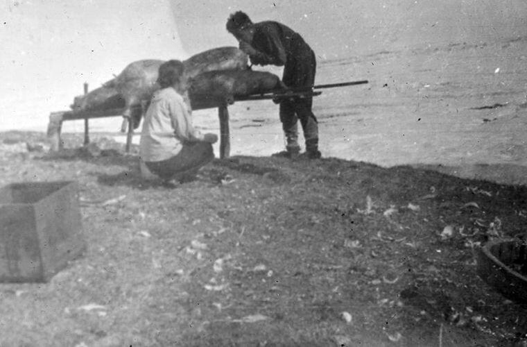 Арктическая истерия и зеленые глаза Аллана Кроуфорда Ада Блэкджек, арктика, интересно, история, познавательно, факты
