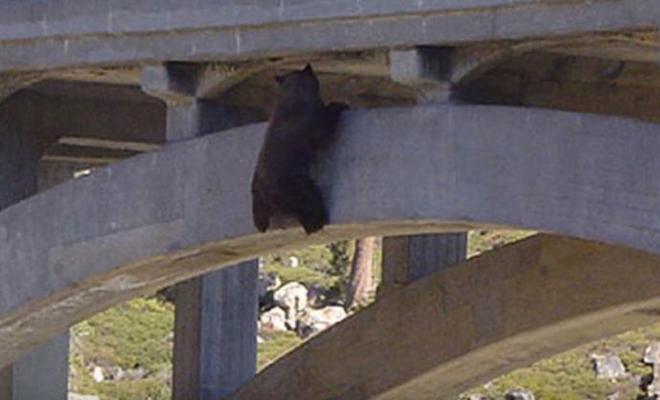 Медведь забрался на мост, но не рассчитал сил и повис на 24 часа в воздухе, пока не помогли люди