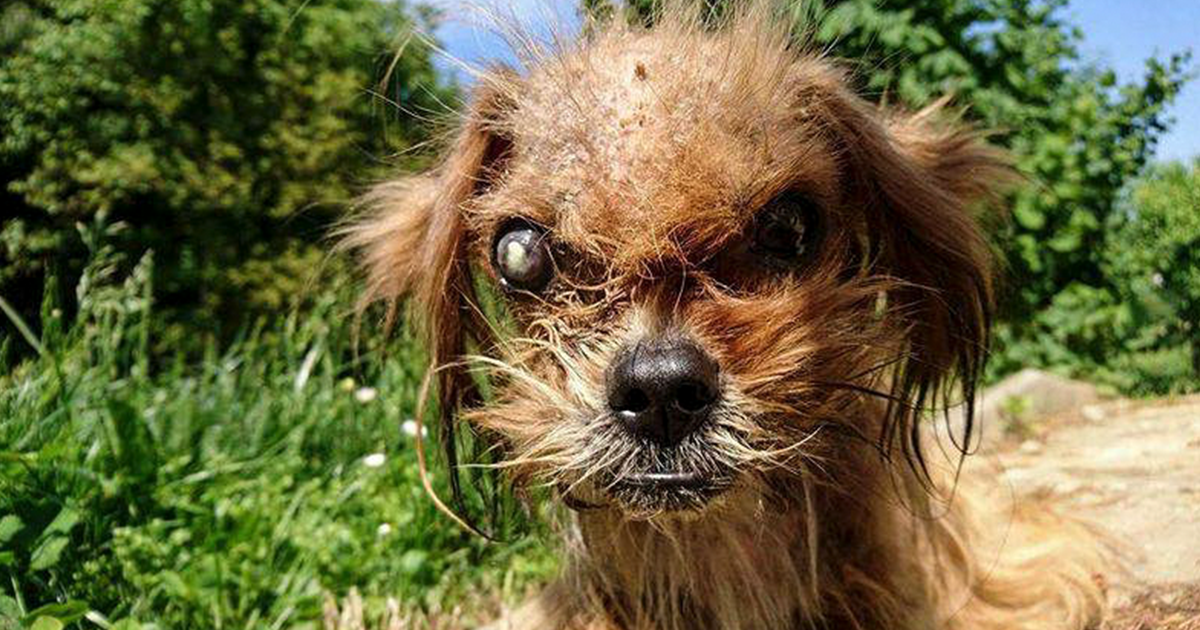It's Unbelievable How Much This 'Scary' Dog Changed In 8 Months After Being Rescued From The Streets