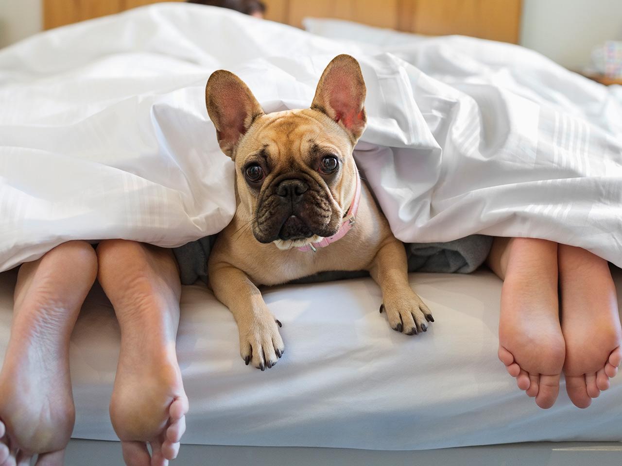 Доказано, что домашние животные в кровати приносят нам чувство спокойствия и безопасности