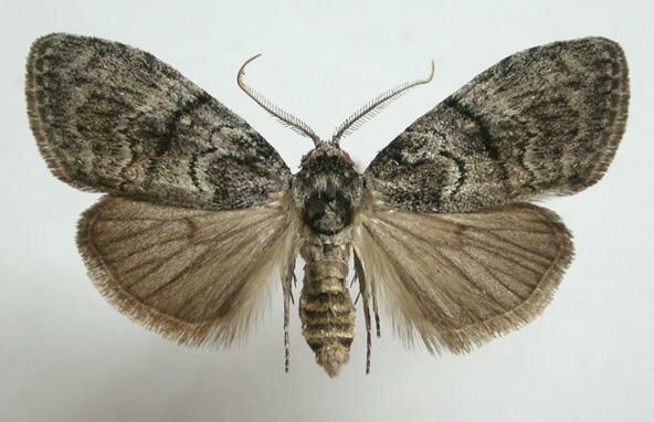 10 невероятных фактов о насекомых Скарабей, жуки, крылья, муха, насекомые, стрекоза, факты