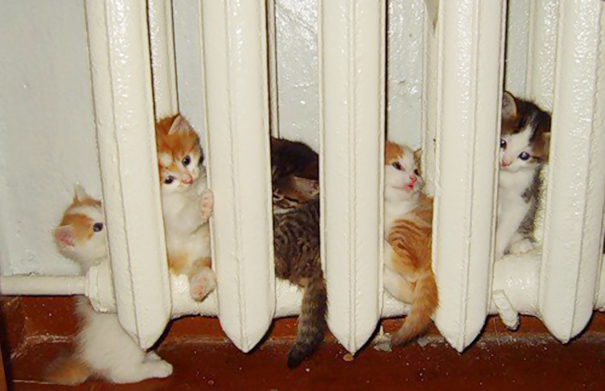 25 фотографий котов, которые любят тепло больше всего на свете
