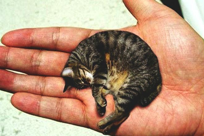 Самые маленькие и милые породы кошек