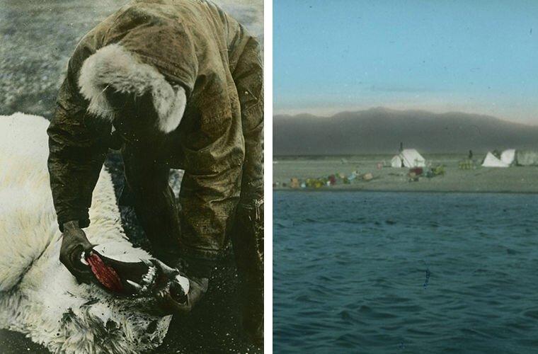 Белые медведи встречались на каждом шагу Ада Блэкджек, арктика, интересно, история, познавательно, факты