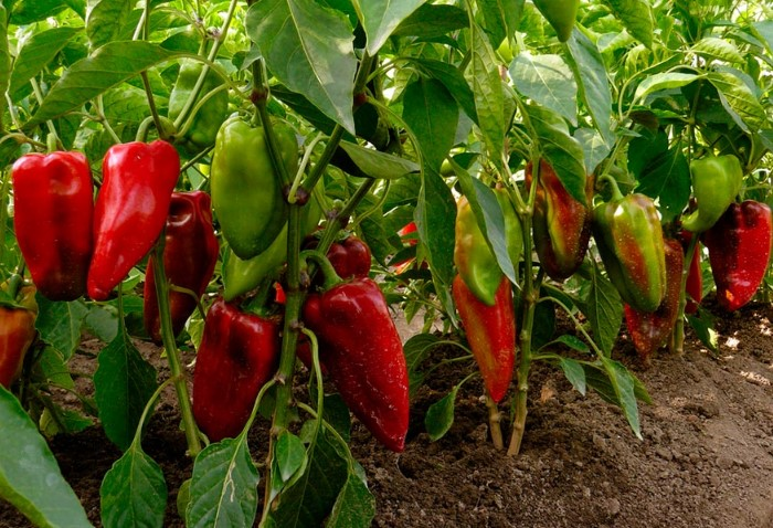 8 овощей и зелени, которые можно сажать на рассаду в марте дача,овощи,рассада,сад и огород
