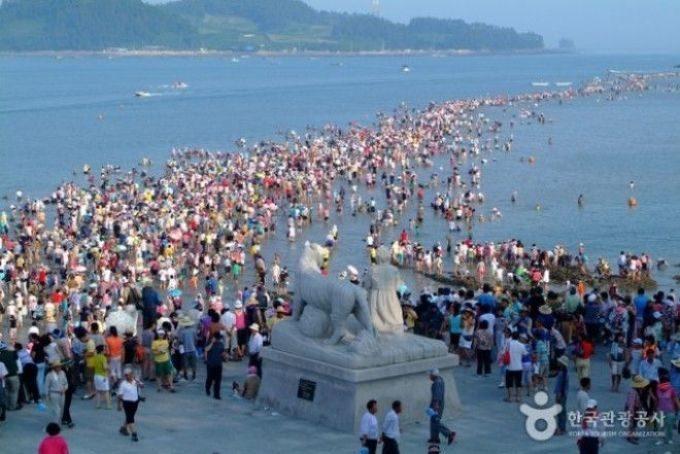 Чудо Моисея в Южной Корее — у острова Чиндо расступается море